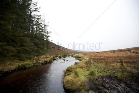 Grass : Stream running through wicklow national park