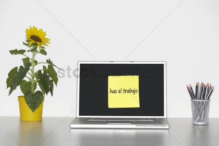 Advice : Sunflower plant on desk and sticky notepaper with spanish text on laptop screen saying  haz el trabajo   do some work