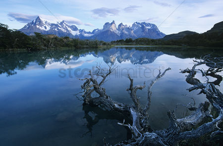 Trees : Tranquil lake in mountains