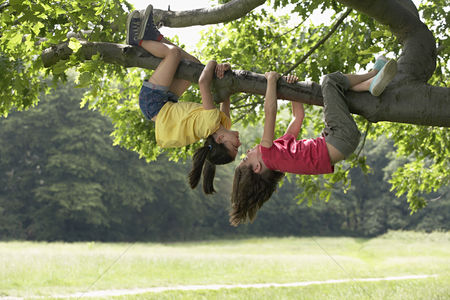 Trees : Two girls  7-9  hanging upside down in tree