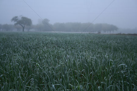 Land : View of frozen grass on meadow