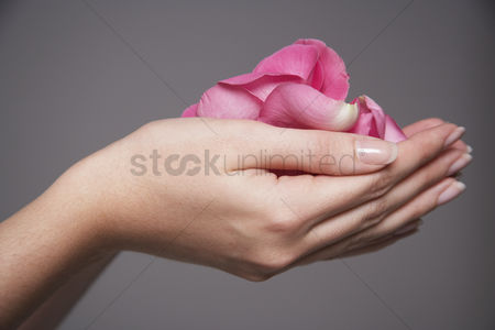 Pink : Woman cupping hands full of pink rose petals close-up on hands