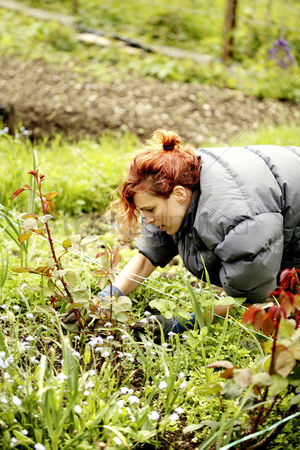 Lively : Woman gardening in the garden