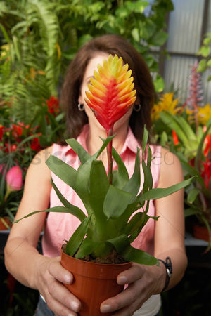 Greenhouse : Woman holding tropical plant covering face