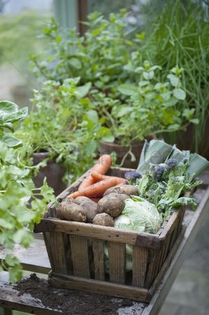England : Wooden crate of fresh vegetables