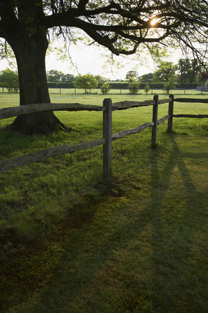 England : Wooden fence and tree on field