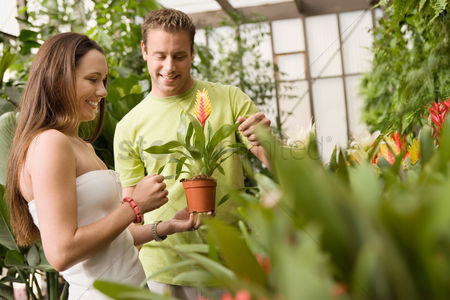 Greenhouse : Young couple looking at exotic potted plant in greenhouse
